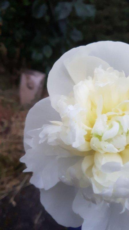Üppige Blume