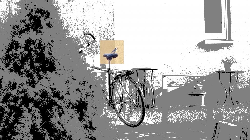 Meise auf einem Fahrradsattel vor gelber Hauswand neben einem Busch. Die Meise schaut nach rechts. Ein Fenster in der Hauswand, davor auf dem Rasen ein Tischchen mit Blumentopf.